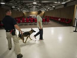 Window Seats For Dogs - tsa dog teams hunt for explosives boost security and speed