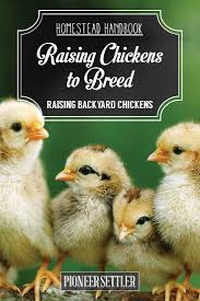 Raising Meat Chickens Your Backyard by Raising Chickens To Breed Homestead Handbook