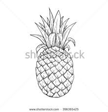 illustration pineapple line art sketchy style stock vector