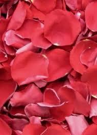 Rose Petals Red Biodegradable Freeze Dried Rose Petals Preserved Wedding