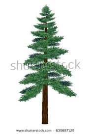 pine tree stock images royalty free images vectors