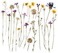 pressed flowers flower pressing 101 1 ranked los angeles florist
