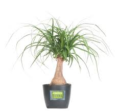 costa farms introduces durable plants of steel houseplant collection