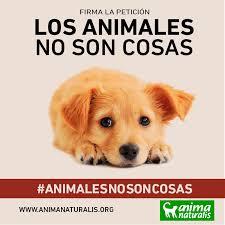 imagenes de animales y cosas los animales no son cosas actúa legislación animanaturalis