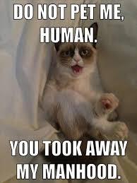 Grumpy Cat No Meme - the best of grumpy cat 70 pics