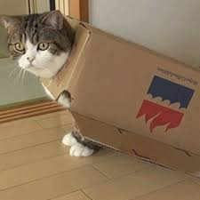 Cardboard Box Meme - 19 irresistible gifs of cats in boxes from gifguide and funny or die
