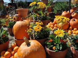 autumn pumpkin wallpaper images of celebrate autumn fall pumpkin sc