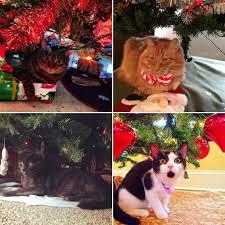 cats under the christmas tree popsugar pets