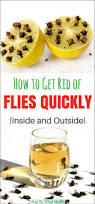 Getting Rid Of Flies In Backyard Flies Can Be Quite Disturbing As They Are Constantly Around Us
