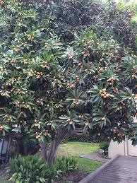 san antonio native plants find plant flower tree shrub perennial annual texas native