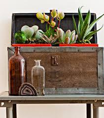 living sculptures fresh ideas for houseplants midwest living