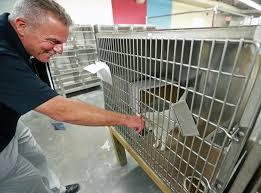 city animal shelter found in crisis the boston globe