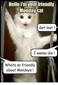 Monday Cat Meme - monday cat meme funny image photo joke 02 quotesbae