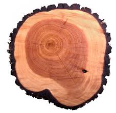 all about tree rings by wesspur tree