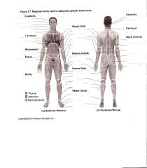 printable anatomy worksheets image collections learn human