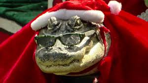 santa gator woman allowed to keep pet alligator in home abc13 com