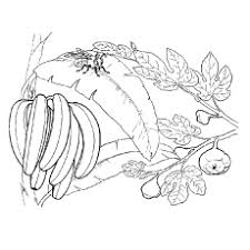 25 free printable banana coloring pages