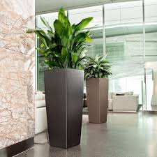 best tall indoor planters images interior design ideas
