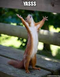 Yasssss Meme - yasss happy squirrel make a meme
