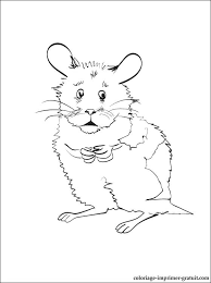 Coloriage Hamster Coloriage De Hamster  rlnginfo