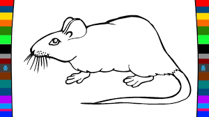animal coloring pages how to draw a mouse drawing and coloring