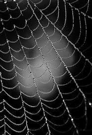 pattern photography pinterest nature photography in black and white tips and exles