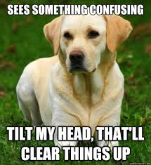 Head Tilt Meme - your dog s adorable head tilt has a surprisingly scientific