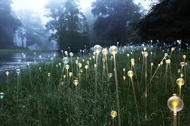 Botanical Gardens In Atlanta Ga by Munro U0027s Artful U0027light U0027 To Illuminate Atlanta Botanical Garden