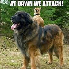 Cute Puppies Meme - at dawn they will attack pet humor cute puppies meme humor