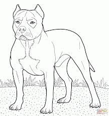 pitbull coloring pages fablesfromthefriends com