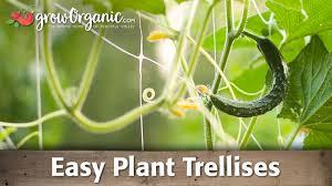 vertical gardening easy plant trellises youtube