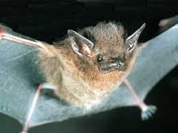 small bat diy bat house benefits the prepared page