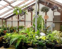 featured plants san mateo arboretum society
