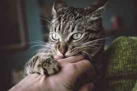our best ideas advice on life with cats cat behavior 101 get inside your cat s head