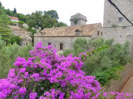 her majesty u2013 bougainvillea u2013 mediterranean gardens and nature