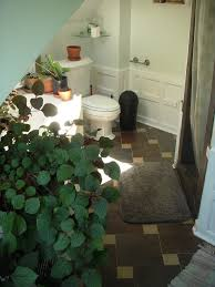 Best Plant For Bathroom by Choosing Condo Plants That U0027s Best For You