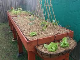 vegetable gardening tales of growing in the vegtrug