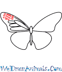butterfly 05 png