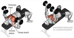 dumbbell bench press exercise guide and video weight training guide