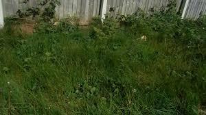 my overgrown garden youtube