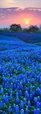 Blue Shades 132 Best Shades Bleu Images On Pinterest Color Blue Shades Of