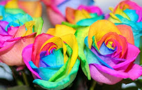 Colorful Roses Wallpaper Flowers Rainbow Flowers Colorful Roses Roses