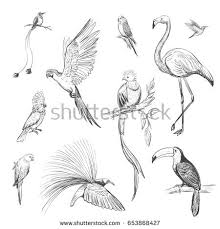 vector set sketches beautiful exotic birds stock vector 653868427