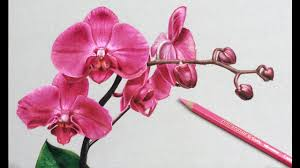 40 beautiful flower drawings and realistic color pencil drawings