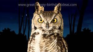 Happy Birthday Owl Meme - happy birthday owl song youtube