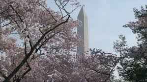 News   U S  Department of the Interior US Department of the Interior Cherry Blossom