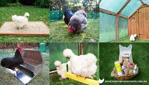 Backyard Accessories 6 Essential Accessories For Your Backyard Chicken Coop