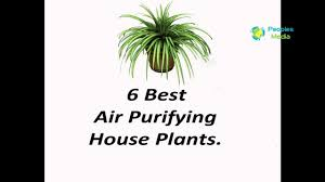 Best Houseplants House Plants 6 Best Air Purifying House Plants Peoples Media