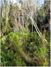 zylstra china1800 fruit bouquets land free text landscape biodiversity decline and a