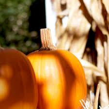 pumpkin iphone background wallpaper weekends falling in leaves mactrast